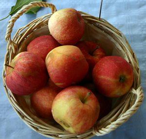 La saison des pommes !